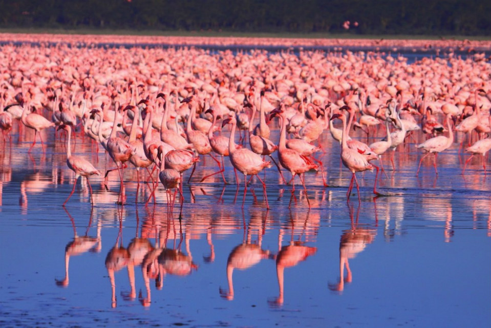 PINK-FLAMINGO-1-LAKE-SMARTTRAVEL-BG